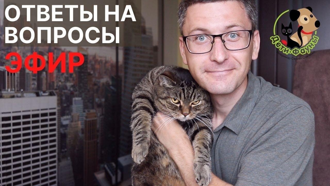 11.09.21 Ветеринар Сергей и кот Сэмыч отвечают на вопросы о кошках и собаках