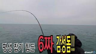 추자도 갯바위 찌낚시..평생 낚시하면서 한마리도 잡기 힘든 6짜 대물 감성돔!!.....그리고 방생!!  (fishing)
