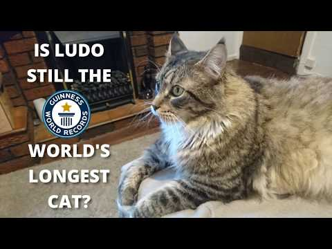 is-ludo-still-the-world's-longest-cat?