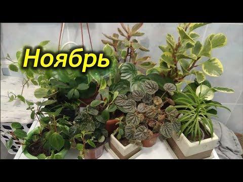 НОЯБРЬ – сезонные работы. Уход за комнатными растениями в ноябре.