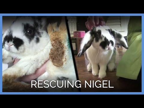 Rescuing Nigel