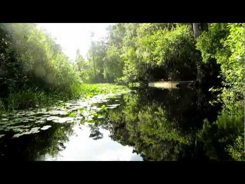 Billy's Island in the Okefenokee Swamp