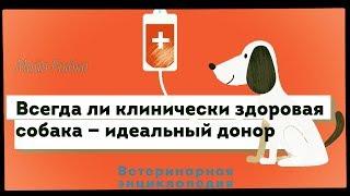 Собака — донор крови