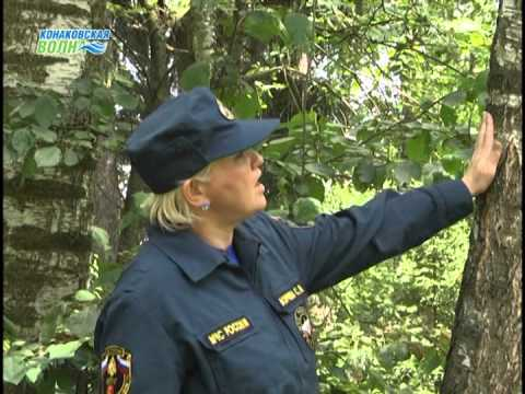 Советы спасателей: Если Вы заблудились в лесу