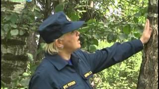 Советы спасателей: Если Вы заблудились в лесу(, 2014-07-11T04:54:32.000Z)
