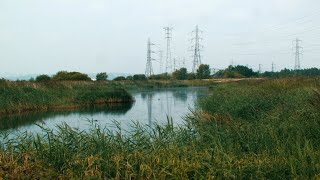 'Levelling Up': The UK Government's Plan to Pave Over the Gwent Levels