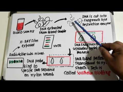 Biology class 12th- DNA Fingerprinting/ molecular basis of inheritance for NEET/AIIMS/AIPMT thumbnail