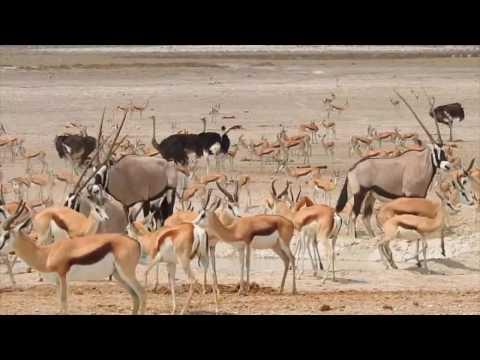 Africa Safari 2017
