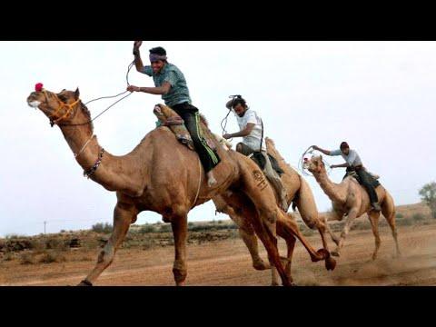 Amazing Camel race in haryana, india