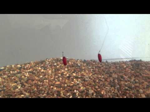 Fluorocarbon Vs Mono Fishing Line Visibility Test Underwater