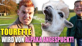 Tourette auf der Alpaka Farm! Jan wird vom Alpaka ANGESPUCKT!
