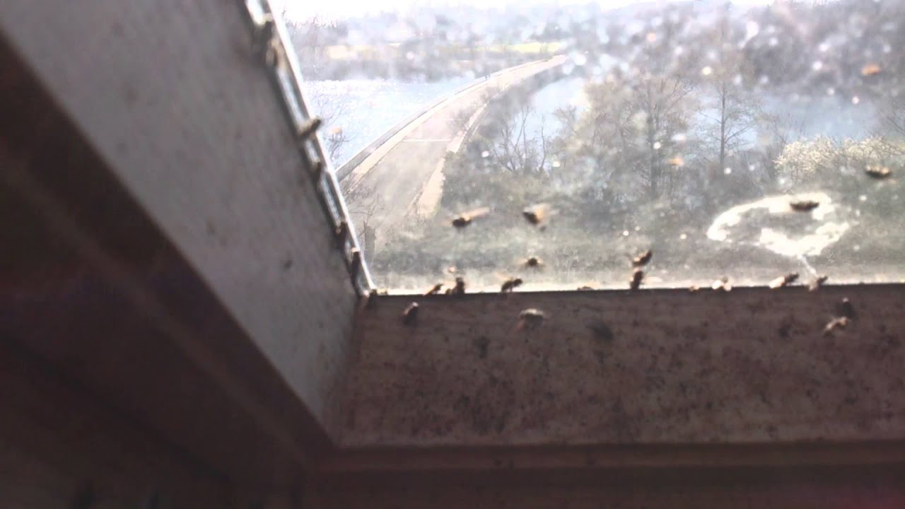 Cluster Flies On A Velux Window Youtube