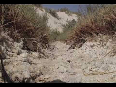 White Sands: White Wilderness