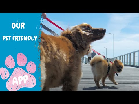 PetStop By RSPCA - SA's Pet-friendly Venue Locator App