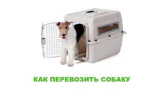 Как перевозить собаку. Ветеринарная клиника Био-Вет.(, 2017-10-10T10:50:35.000Z)