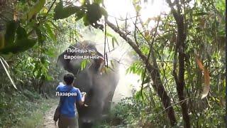 Слон нападает на туриста