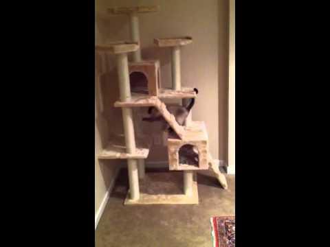 armarkat cat tree expert cute