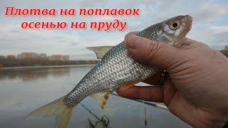Рыбалка Плотва на поплавок осенью на пруду
