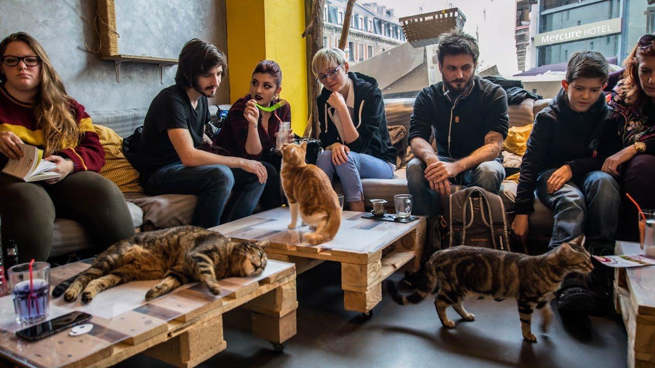 bar chats cat cake strasbourg youtube. Black Bedroom Furniture Sets. Home Design Ideas