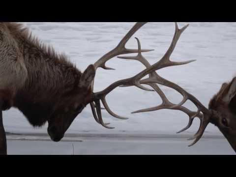 HARDWICKE Wyoming Video Final