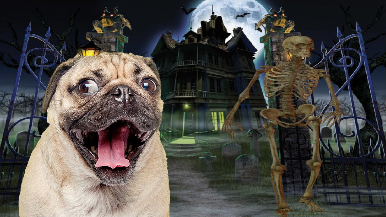 Image result for spooky pugs