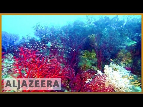🇦🇺 Australia pledges $400m to save Great Barrier Reef | Al Jazeera English