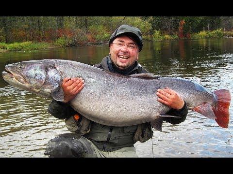 Поставки и продажа свежей охдажденной рыбы ценных пород, широкий ассортимент и выгодные цены продукции, заказать рыбу оптом и в розницу в.