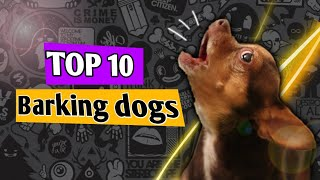 DOGS BARKING | 10 Dog different Breeds Barking HD Sound Effect | FUNNY ANIMALS