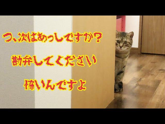 猫が爪を切られる事を悟った時の反応がかわいすぎるw