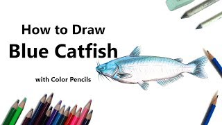 How to Draw a Blue Catfish with Color Pencils [Time Lapse]