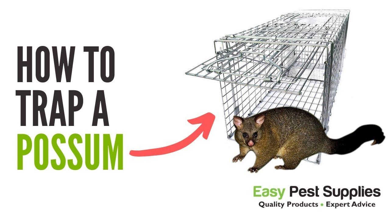 Possum Trap