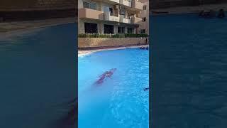 تعليم السباحة الحرة 👌