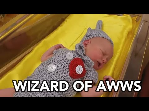 Newborns Dressed Up As 'Wizard Of Oz' Characters At Pennsylvania Hospital