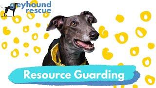 Greyhound Rescue  Resource Guarding