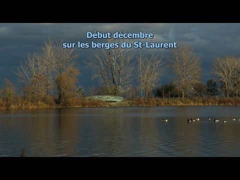 Vidéo: Début décembre sur les berges du St-Laurent  - Parc des Rapides, LaSalle