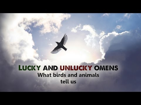 Spiritual - Lucky And Unlucky Omens  What Birds And Animals Tell Us