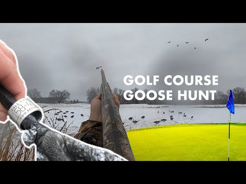 BANDED Goose Hunt On A GOLF COURSE?! 3 Man Limit!