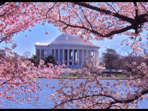 Cherry Blossom Festival 2015: Cherry Blossom Ten Miler ...