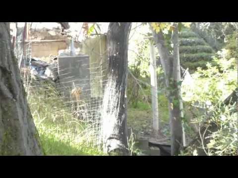 backyard drilling, Friday Nov 23, 2012, 21 Bishop Lane, Menlo Park, CA