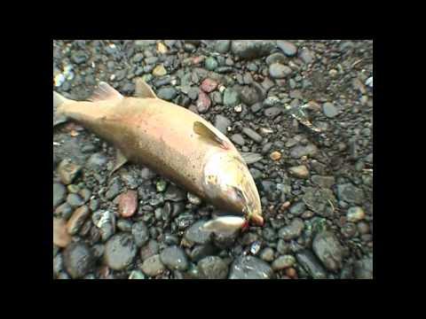 видео про рыбалку на дальнем