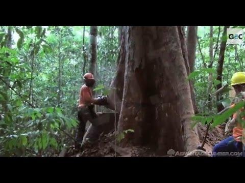 Deforestación en el Amazonas / Deforestation in the Amazon Basin [IGEO TV]