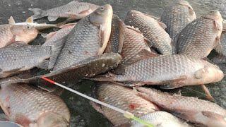 Вот ОНИ ДАВЯТ - ЛЕСКА СКРИПИТ, КИВКИ ИГРАЮТ!! Зимняя рыбалка на карася 2021