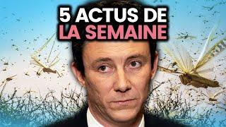 Invasion destructrice de criquets, enfants influenceurs, Benjamin Griveaux... 5 actus de la semaine