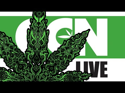 Cannabis Culture News LIVE: The Kush Cup is Back