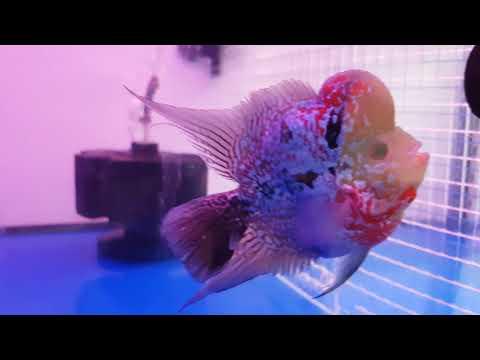 Singapore Aquarium Fish Shops - Part 2/3
