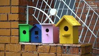 Экологические уроки прошли в детских садах Нижнего Новгорода 5 июня