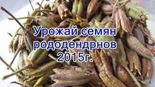 видео Бонсай - Дерево бонсай купить в интернет-магазине GreenMarket