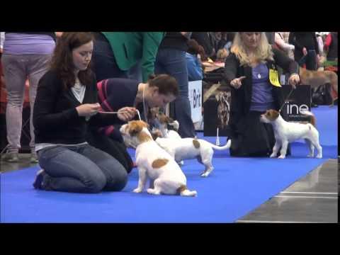 Prague Expo Dog 2.5.2015 JRT