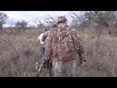 South Africa Archery Cape Buffalo Hunt