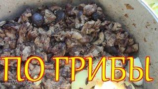 видео Шампиньоны в п. Руднев
